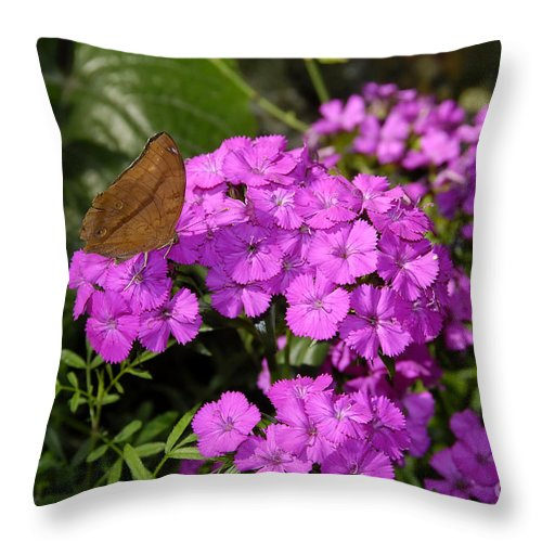 Butterfly Throw Pillow featuring the photograph A Beautiful Landing by David Lee Thompson
