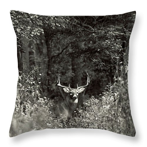 Black And White Throw Pillow featuring the photograph A Big Buck In Rut by John Harmon