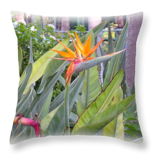 Plant Throw Pillow featuring the photograph A Bird In Paradise by Maria Bonnier-Perez