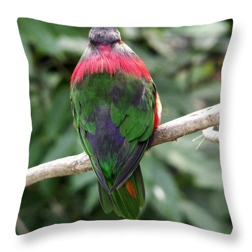 Bird Throw Pillow featuring the photograph A Bird's Perspective by Amy Fose