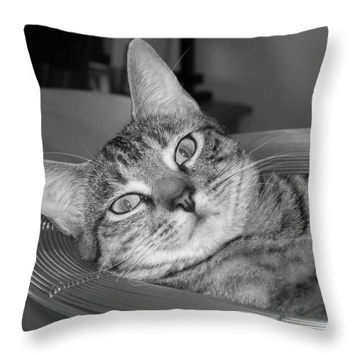 Cat Throw Pillow featuring the photograph A Bowl Of Ginger by Maria Bonnier-Perez