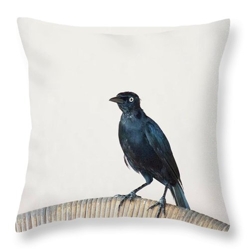 Caribgrackle Throw Pillow featuring the photograph A Carib Grackle (quiscalus Lugubris) On by John Edwards