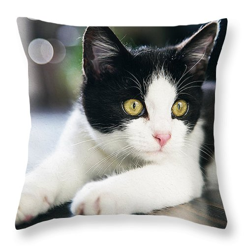 Cat Art Throw Pillow featuring the painting A Cat With Black And White Fur by Queso Espinosa