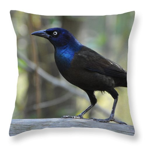 Birds Throw Pillow featuring the photograph A Clever Thief by Jan Amiss Photography