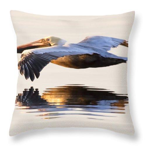 Pelican Throw Pillow featuring the photograph A Closer Look by Janet Fikar