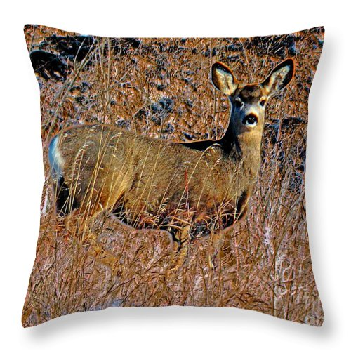 Al Bourassa Throw Pillow featuring the photograph A Doe  A Deer by Al Bourassa