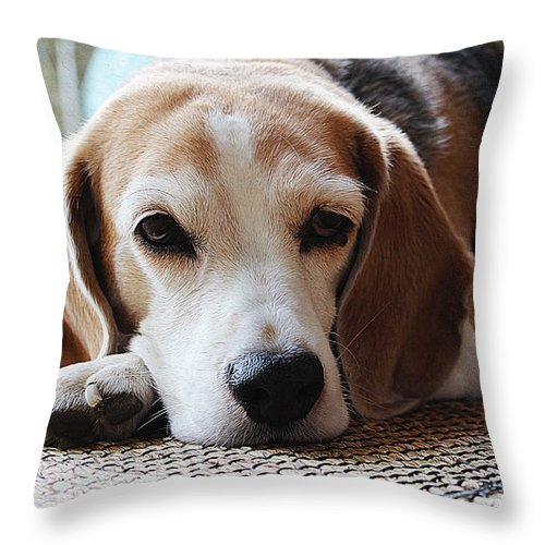 Dog Art Throw Pillow featuring the painting A Dog Thinking by Queso Espinosa
