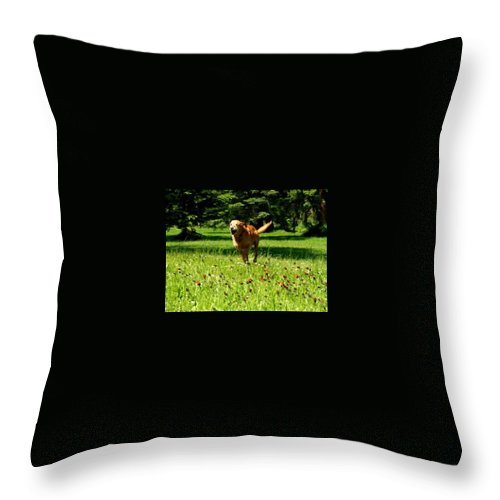 Dog Running Throw Pillow featuring the pyrography A Dogs Freedom by Amber Carpenter