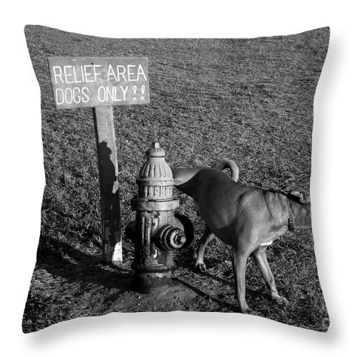 Dog Throw Pillow featuring the photograph A Dog's Life by David Lee Thompson