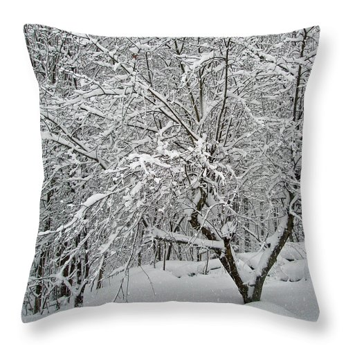 Snow Throw Pillow featuring the photograph A Dogwood Sleeps While The Snow Falls by Mother Nature