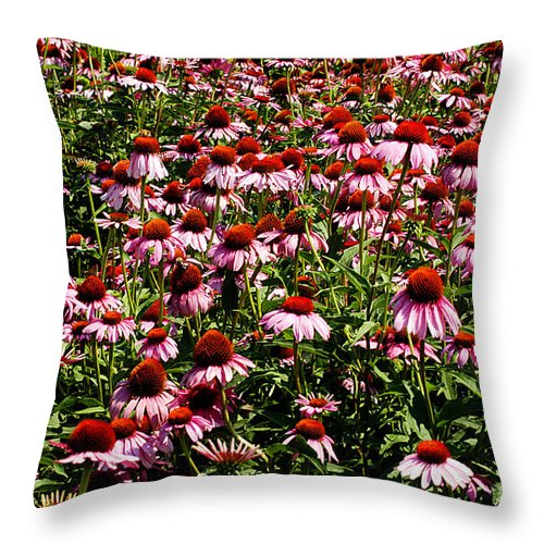 Clay Throw Pillow featuring the photograph A Field Of Echinacea by Clayton Bruster