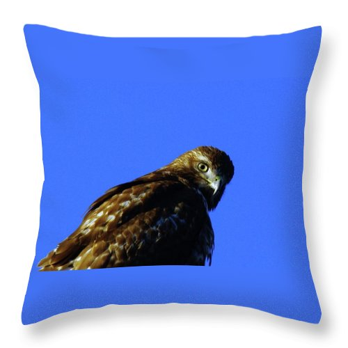 Hawks Throw Pillow featuring the photograph A Hawk Looking Back by Jeff Swan