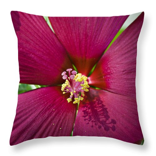 Hibiscus Throw Pillow featuring the photograph A Hole In One by Teresa Mucha