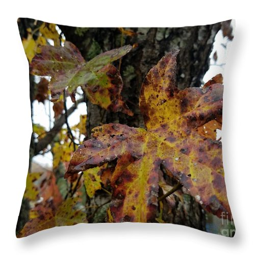 A Lil Bit Of Fall Throw Pillow featuring the photograph A Lil Bit Of Fall by Maria Urso