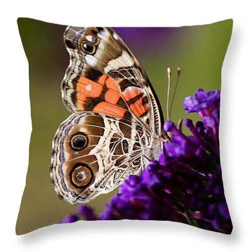 Ann Keisling Throw Pillow featuring the photograph A Little Bit Of Orange by Ann Keisling