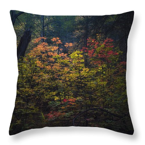 A Little Hint Of Fall Color Throw Pillow for Sale by Saija Lehtonen