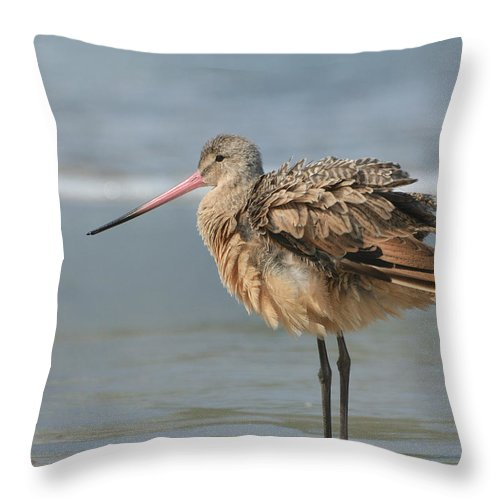 Marbled Godwit Throw Pillow featuring the photograph A Little Shimmy by Fraida Gutovich