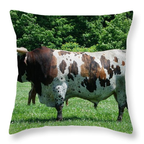 Animals Throw Pillow featuring the photograph A Lot Of Bull by Peggy King
