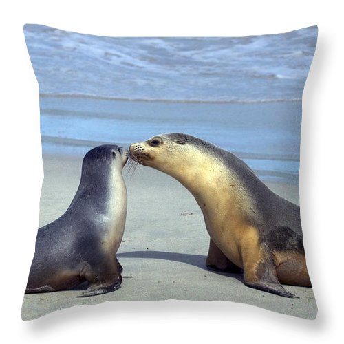 Sea Lion Throw Pillow featuring the photograph A Mothers Love by Mike Dawson