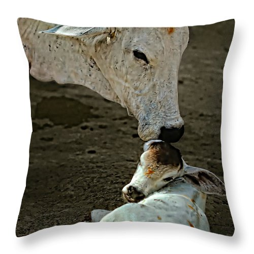 Cow Throw Pillow featuring the photograph A Mother's Love by Steve Harrington