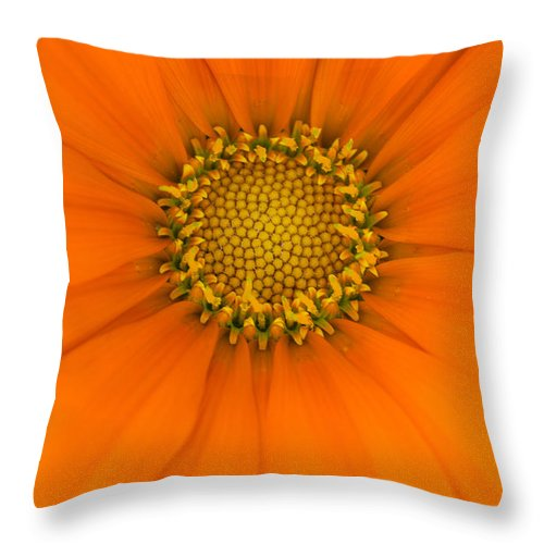 Gazania Throw Pillow featuring the photograph A New Day by Penny Meyers