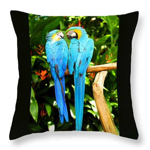 Bird Throw Pillow featuring the photograph A Pair Of Parrots by Marilyn Hunt