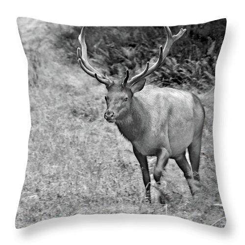 Olympic Elk Throw Pillow featuring the photograph A Rack Of Antlers - Roosevelt Elk - Olympic National Park Wa by Christine Till