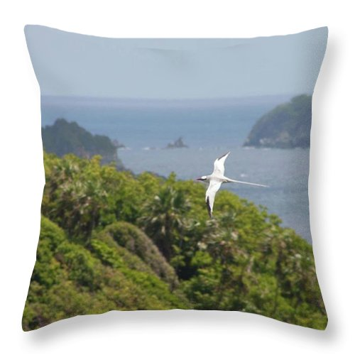Tropicbird Throw Pillow featuring the photograph A Red-billed Tropicbird (phaethon by John Edwards