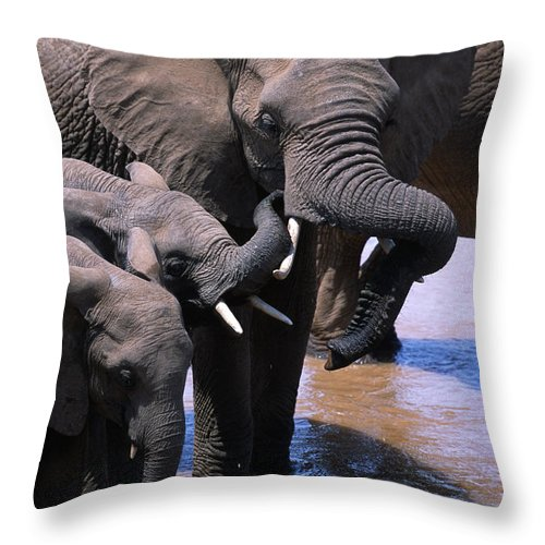 Africa Throw Pillow featuring the photograph A Refreshing Moment by Sandra Bronstein