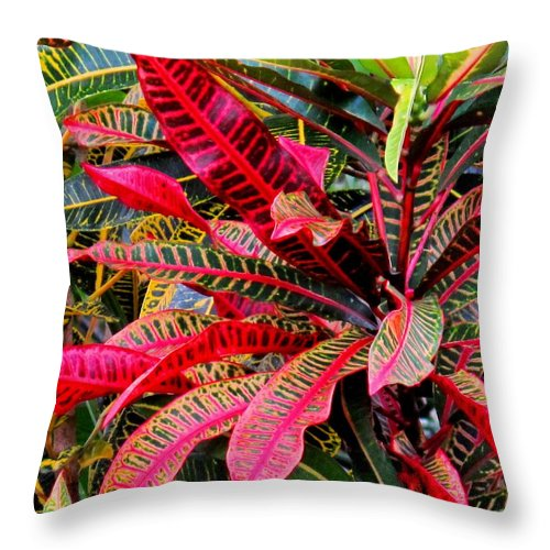 Red Throw Pillow featuring the photograph A Rich Composition by Ian MacDonald
