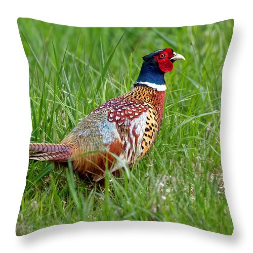 Animal Throw Pillow featuring the photograph A Ring-necked Pheasant Walking In Tall Grass by Delmas Lehman
