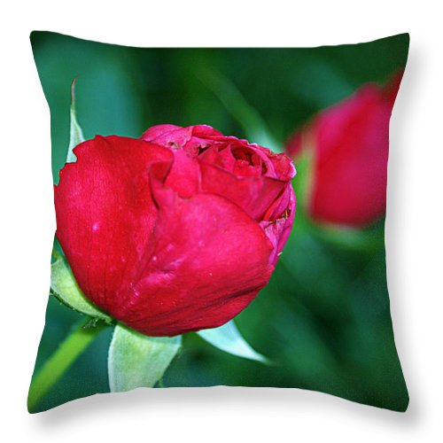 Rose Throw Pillow featuring the photograph A Rose By Any Other Name by Cricket Hackmann