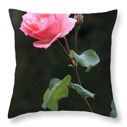 Pink Rose Throw Pillow featuring the photograph A Rose For Rodin by Carol Groenen