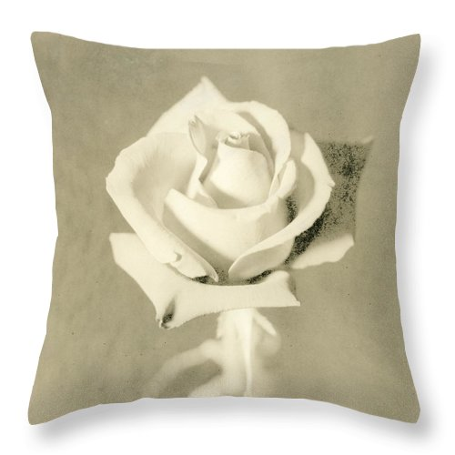 Rose Throw Pillow featuring the photograph A Rose Of Alternate Processed by John Harmon