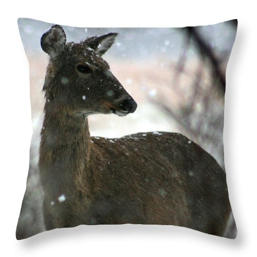 Deer Throw Pillow featuring the photograph A Sideways Look by David Dunham