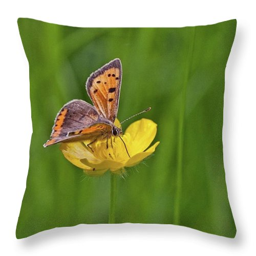 Insect Throw Pillow featuring the photograph A Small Copper Butterfly (lycaena by John Edwards