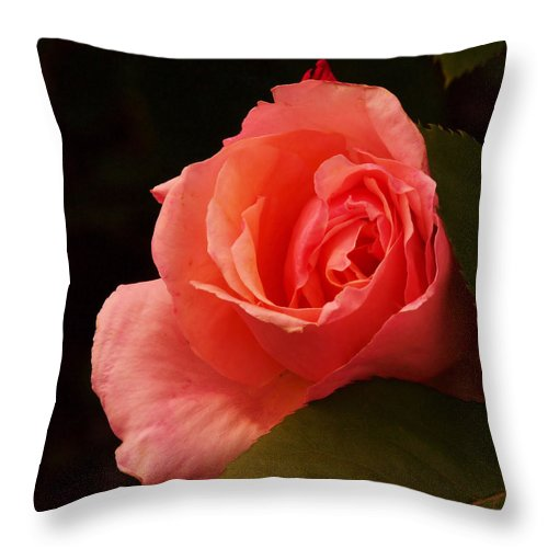 Flowers Throw Pillow featuring the photograph A Soft Rose by Jeff Swan