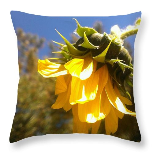 Sunflower Throw Pillow featuring the photograph A Soft Touch by LKB Art and Photography