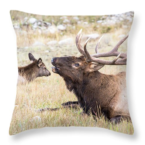 Elk Throw Pillow featuring the photograph A Song Of Love by Alex Lapidus