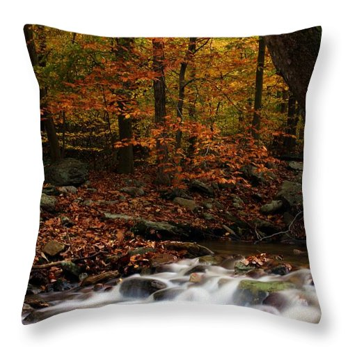 Autumn Throw Pillow featuring the photograph A Spectacle by Mitch Cat