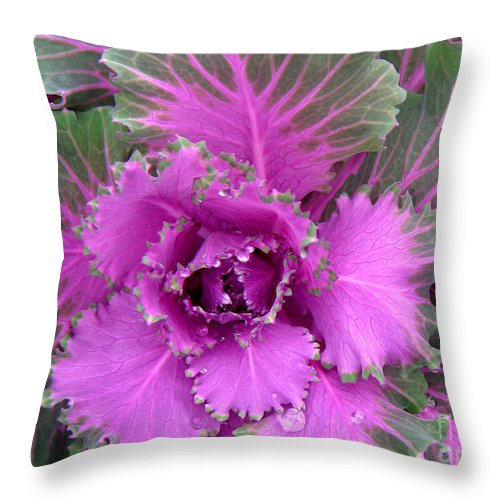 Nature Throw Pillow featuring the photograph A Study In The Shades Of Spring Four by Lucyna A M Green