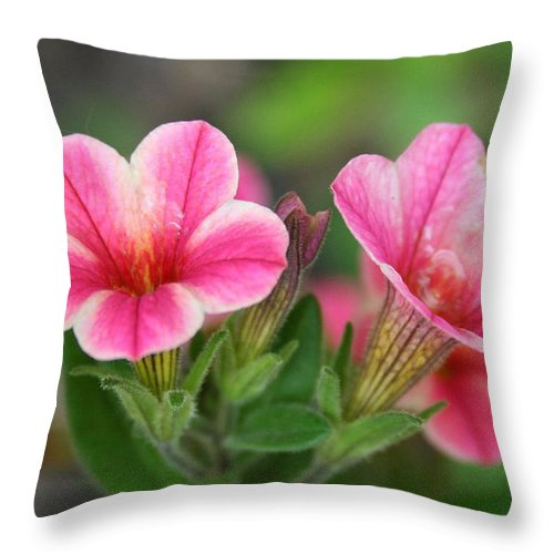 Flowers Throw Pillow featuring the photograph A Sunny Afternoon by Linda Sannuti