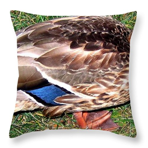 Duck Throw Pillow featuring the photograph A Tame Crow by Will Borden