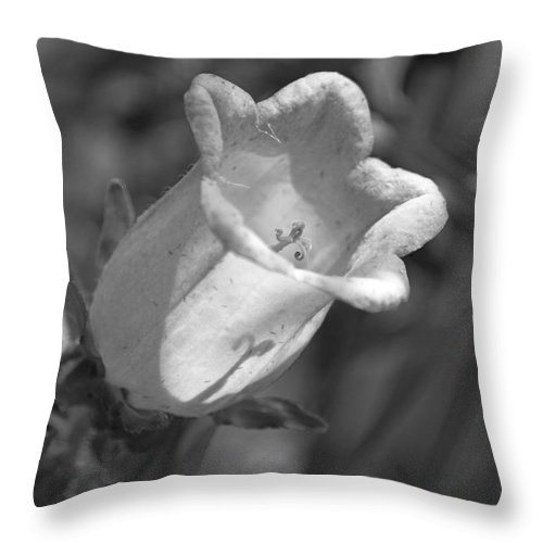 Flower Throw Pillow featuring the photograph A Thing Of Beauty In Black And White by Suzanne Gaff