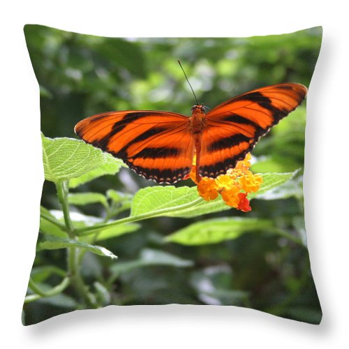 Bug Throw Pillow featuring the photograph A Tiger Amongst The Petals by David Dunham