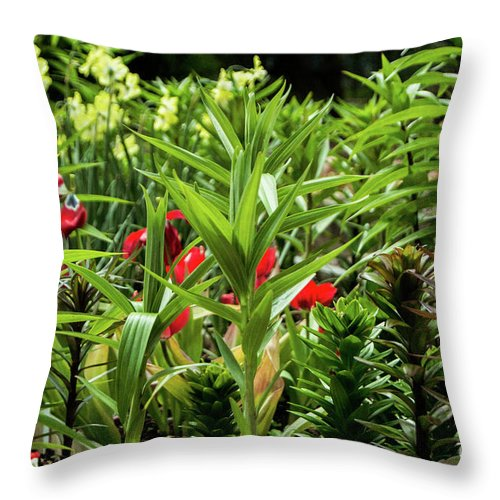 Plants Throw Pillow featuring the photograph A Time To Discover by Edmund Mazzola