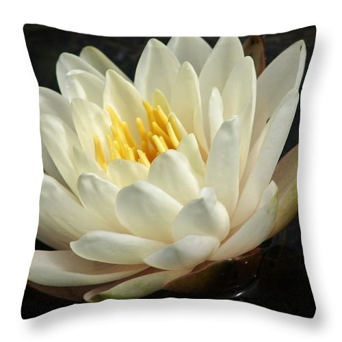 Nature Throw Pillow featuring the photograph A Touch Of Elegance On The Pond by Bruce Bley