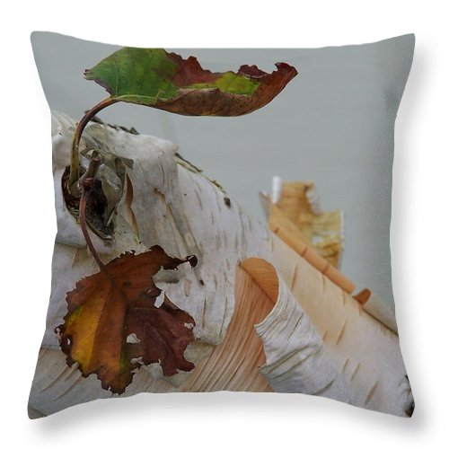 Birch Throw Pillow featuring the photograph A Touch Of Fall by Gale Cochran-Smith