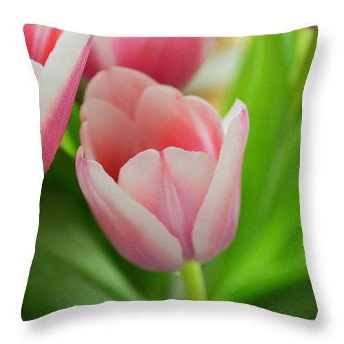 Flower Throw Pillow featuring the photograph A Touch Of Spring by Felicia Tica