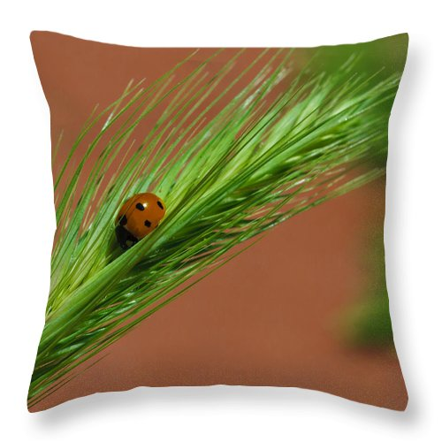 Ladybug Throw Pillow featuring the photograph A Walk In The Tall Grass by Dennis Reagan